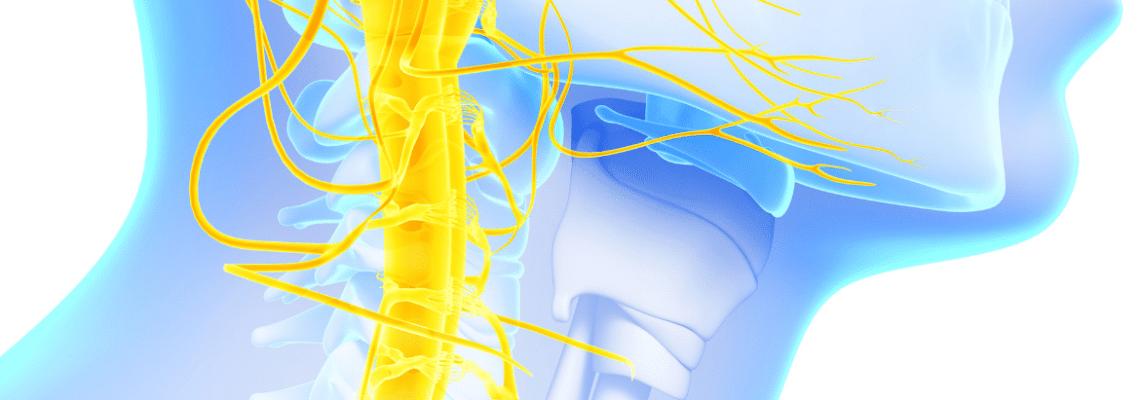 Brakial Pleksus Yaralanması Nedir?